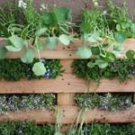 Construction d'un jardin vertical avec une jardinière fait d'une palette