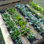 Construire un petit jardin de palettes pour votre terrasse ou patio