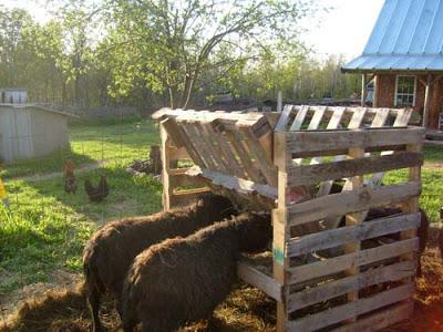 Palettes abreuvoir pour votre bétail