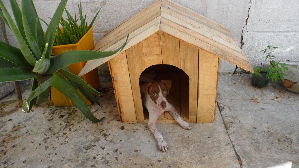 Construire une niche de palettes avec des bo tes de - Niche pour chien en palette ...
