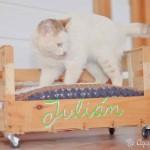 Comment faire un lit avec une boîte de fruits pour nos animaux de compagnie