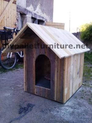 Le chien de la maison de Manou avec des palettes 5