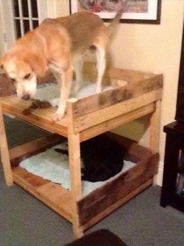 lit superpose pour chien