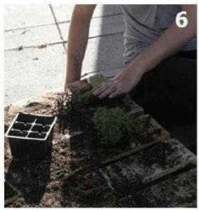 Instructions sur la façon de créer un mur vert avec une seule palette 6