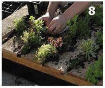 Instructions sur la façon de créer un mur vert avec une seule palette 8