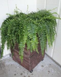 Construire un planteur mobile avec palettes