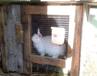 Costruire una conigliera con i pallet4