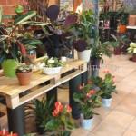 Exposants pour les jardinières construits avec des palettes