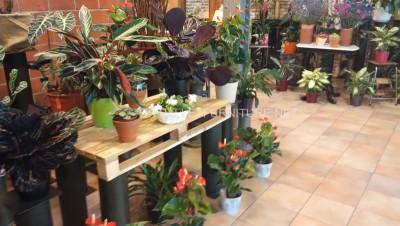 Exposants pour les jardinières construits avec des palettes 2