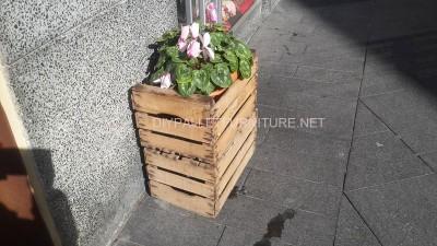 Jardinières improvisés avec des boîtes de fruits 2
