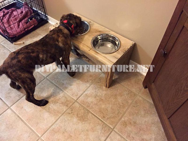 De l'Alimentation et des bols d'eau pour les chiens faits avec du bois recyclé 3