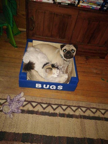 petit lit pour chien fabriqu avec des palettesmeuble en palette meuble en palette. Black Bedroom Furniture Sets. Home Design Ideas